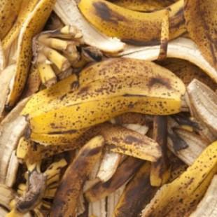 Банановая кожура против тли в саду