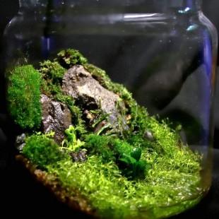 Биосфера на дому