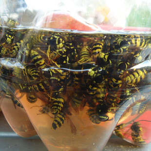 Ловушка для мух, ос и других насекомых